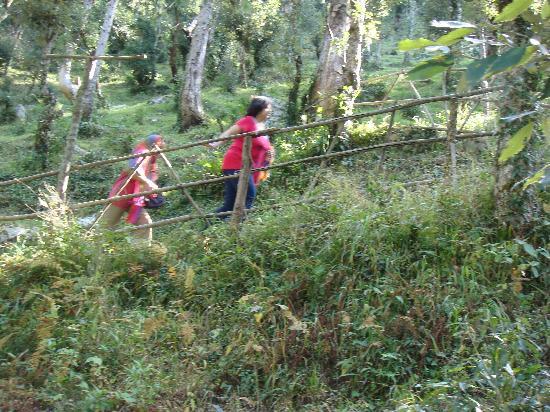 birdsnchirps Homestay: 200 steps to climb
