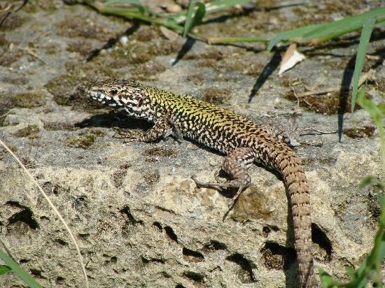 Relais Villa Grazianella - Fattoria del Cerro: Local fauna