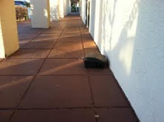 Ramada Las Cruces Hotel and Conference Center: A rat trap outside the Ramada Palms