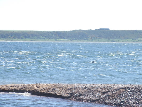 Fortrose, UK: Dolphin's tail at Chanonry Point