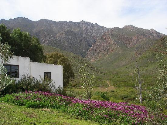 Tierhoek Cottages: The cottage