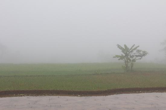 Villa Sumbing Indah: Misty padi field in the early morning.