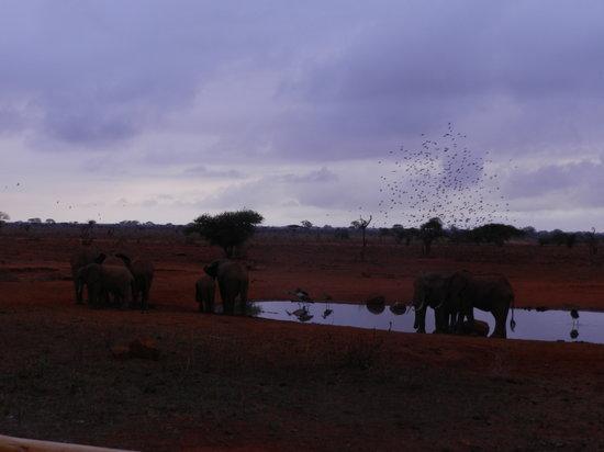 Ngutuni Safari Lodge: The watering hole