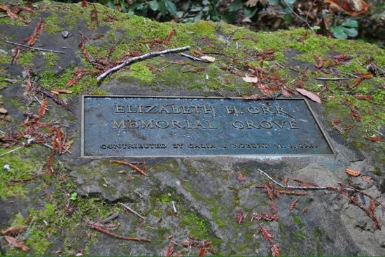 Montgomery Woods State Reserve: one ofthe grove's