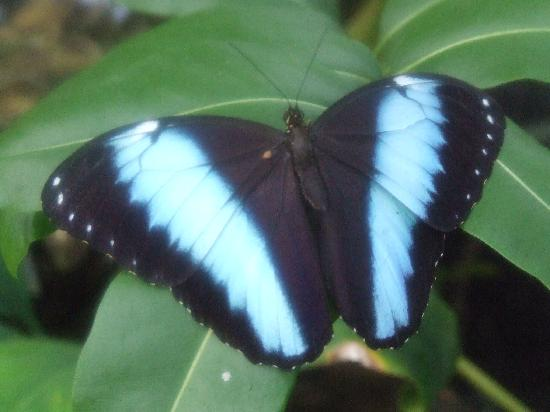 Botanischer Garten Muenchen-Nymphenburg : Butterfly area