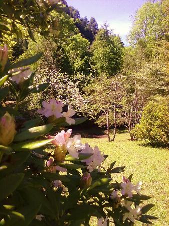 Hotel Salto del Carileufu: Nuestro Parque
