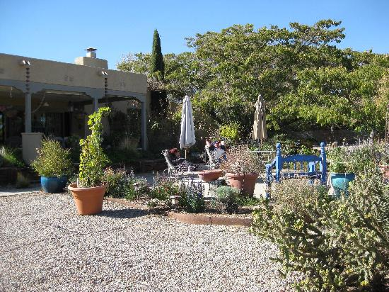Chocolate Turtle Bed and Breakfast: Backyard with great desert landscaping.