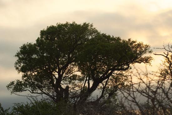 Kapama Karula : Sunset at Kapama