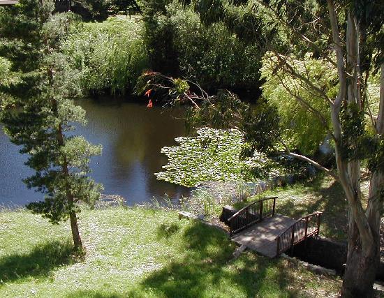 Black Heron Inn: The wildlife pond seen from Black Heron deck