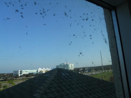 BEST WESTERN PLUS Lake County Inn & Suites: flies on window