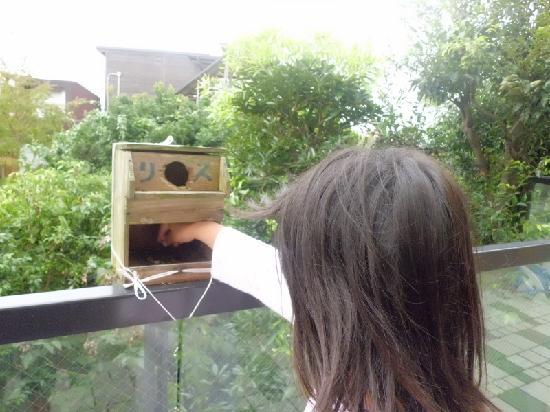 Reflet's Izukogen: フロント前にあるフロア窓越しにリスの餌箱があり餌をあげられます。