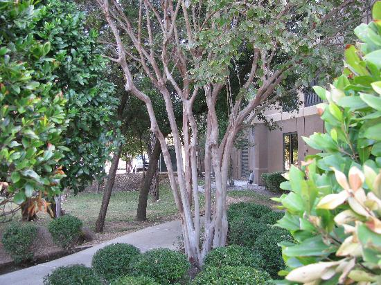 Hampton Inn Austin - Arboretum Northwest: Trees Near one of the Entrances