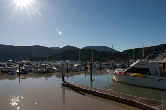 Havelock Motel and Motor Lodge: Havelock Marina Views