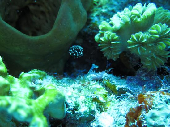 Cozumel Spotted Eel Picture Of Living Underwater