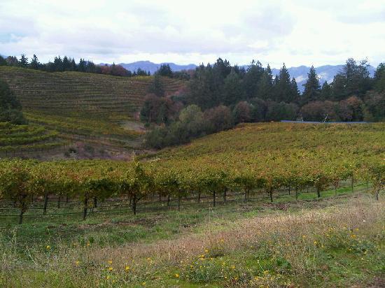 Schweiger Vineyards: View of the vines