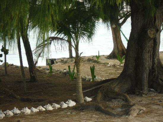 Pelican Beach Hotel: My walkway to the Hammock