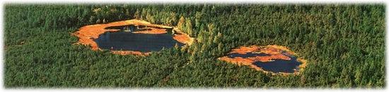 Heuweiler, Deutschland: Das größte noch lebende Schwarzwälder Hochmoor mit einigen schönen Moorseen ist das Naturschutzg