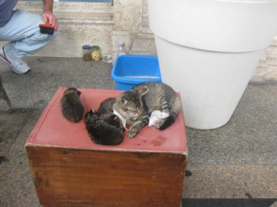 Hotel Due Colonne: Des chats amis des souris