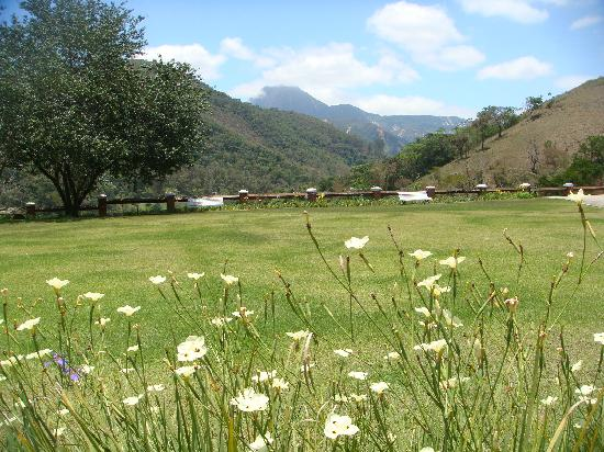 Quinta da Paz Resort : Flowers and field II