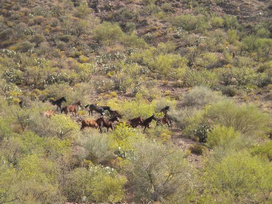 Williams Family Ranch : Freilandpferdehaltung
