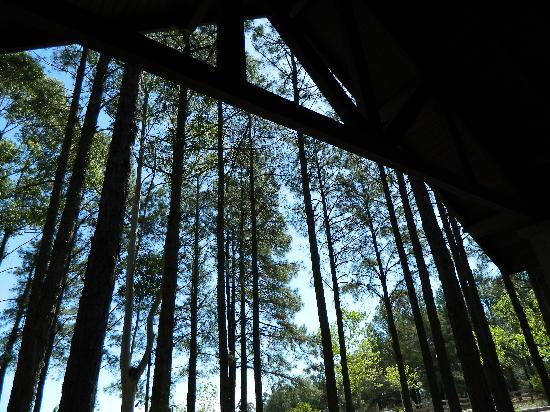 Carmelo Resort & Spa, A Hyatt Hotel: vista del bosque desde la cama