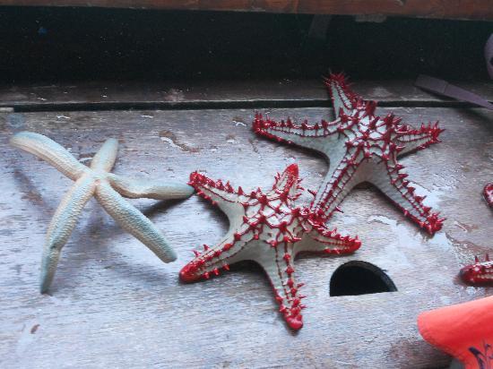 Ora Resort Watamu Bay: stelle marine