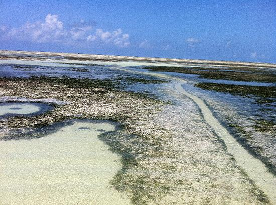 Mahonda, Tanzania: Passeggiata verso la barriera corallina