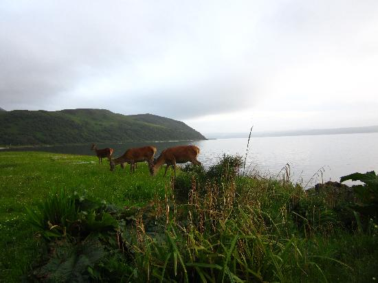 Clisham B&B: wildlife on Arran - between the road and the sea