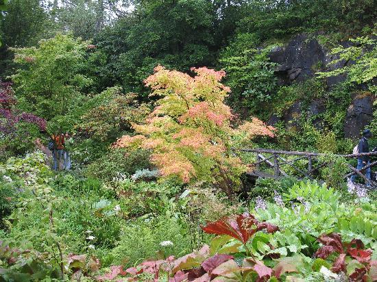 Dunvegan, UK: altro particolare dei giardini