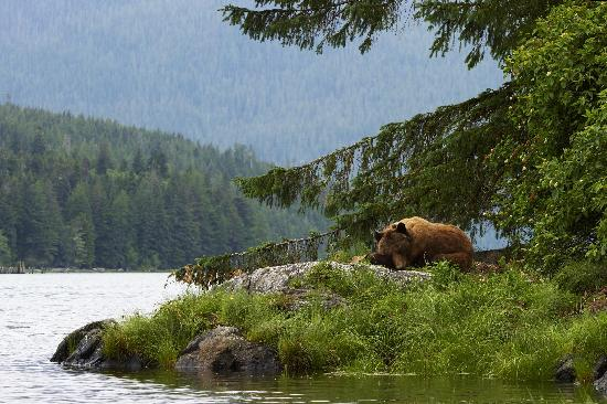 Knight Inlet Lodge: Grizzly bear viewing