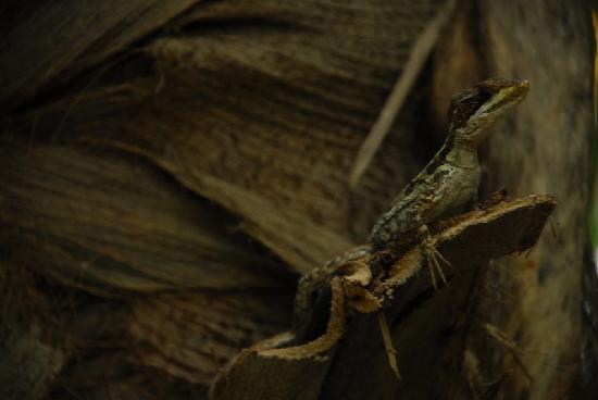 Cenote Encantado: LIZARD
