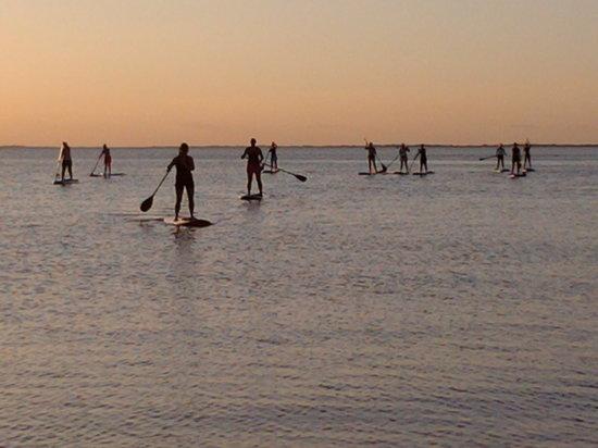 Sarasota Paddleboard Company : evining trips