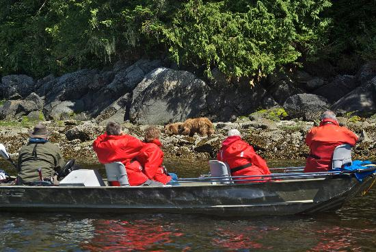 Knight Inlet Lodge: grizzly bear viewing by boat