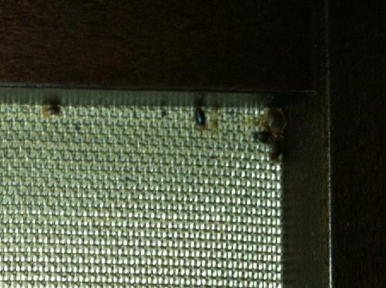America's Best Value Inn: This is a bedbug infestation