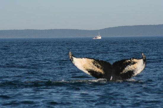 Mariner Cruises Whale and Seabird Tours: The perfect shot!