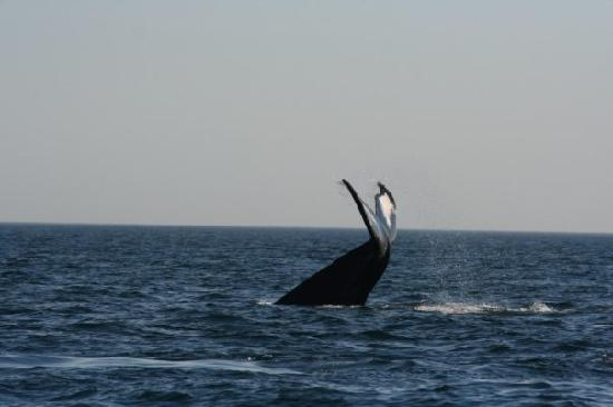 Mariner Cruises Whale and Seabird Tours: Show off!