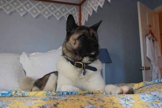 Brass Lantern Inn : rest and relaxation
