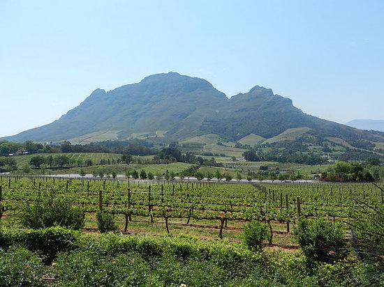 I Love Cape Town Tours: Winelands - Stellenbosch