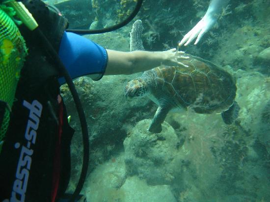 Dive Center Descubare-Atlantico: Touching moment