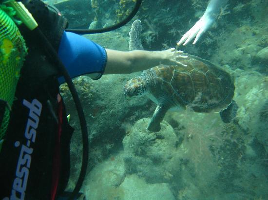 Dive Center Descubare-Atlantico: Sea Turtles