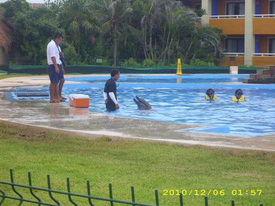 Grand Bahia Principe Tulum: dauphin vue de mon balcon