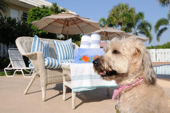 Beachside Village Resort: Pet Friendly to Friendly Pets