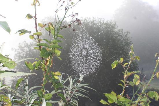 Cobweb in the mist at Killagorden Cottage
