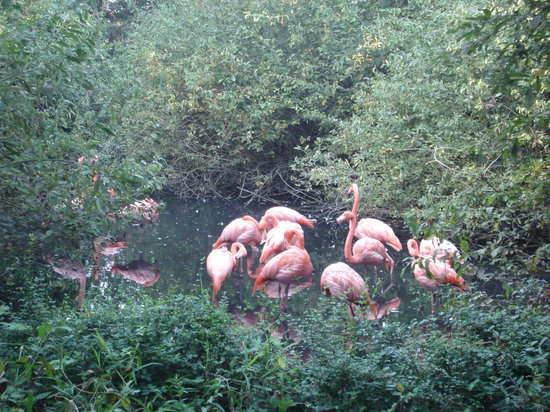 Oasi di Sant'Alessio : i fenicotteri rosa