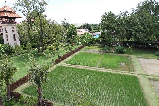 Siripanna Villa Resort & Spa: Garden & Rice field