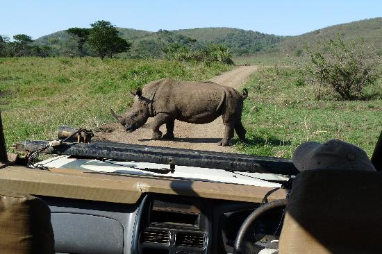 Bushlands Game Lodge: A close encounter in HluHluwe Game Reserve
