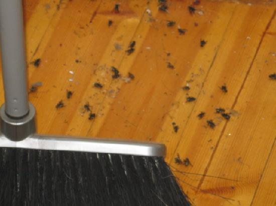 The Boat House: Flies