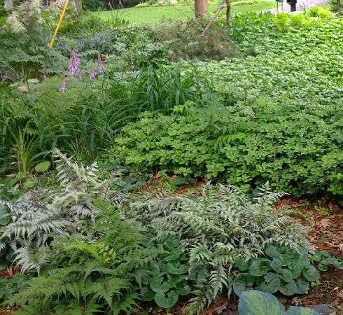 Hadley Meadow Bed and Breakfast: Shade garden