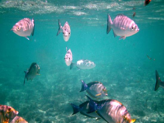 Summer Island Maldives: snorkelling just in shallow water