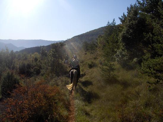 Brezilhou Riding Stables : Morning Mist